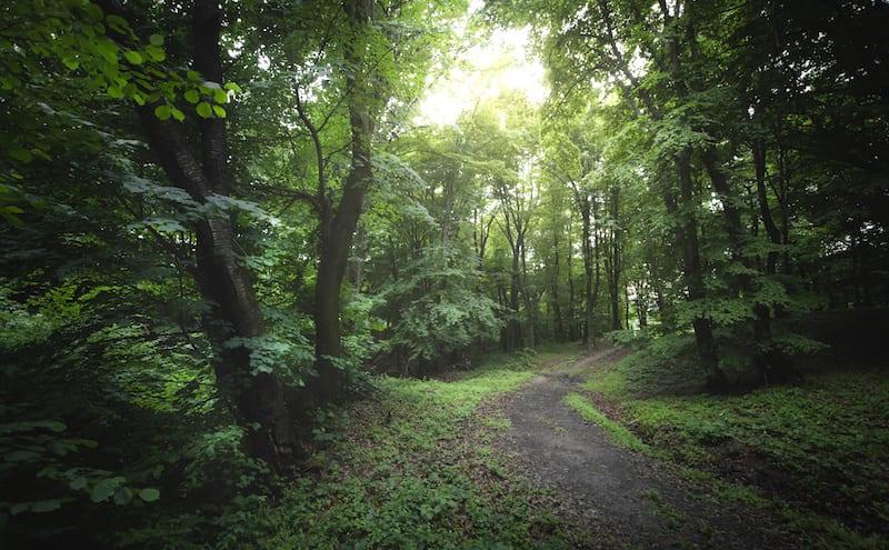 森の中の二またの道