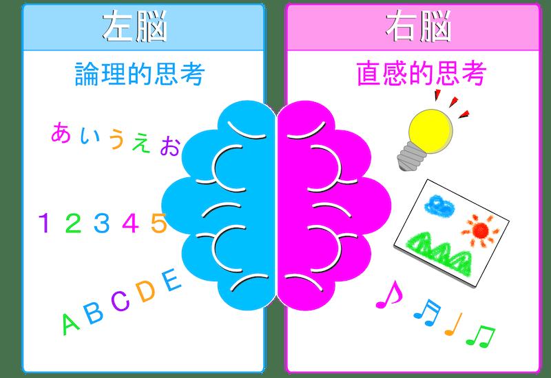 左脳と右脳の仕組み