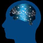 脳のモデル