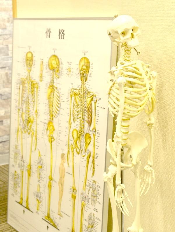 みずしま整骨院 人体の骨格を示した図