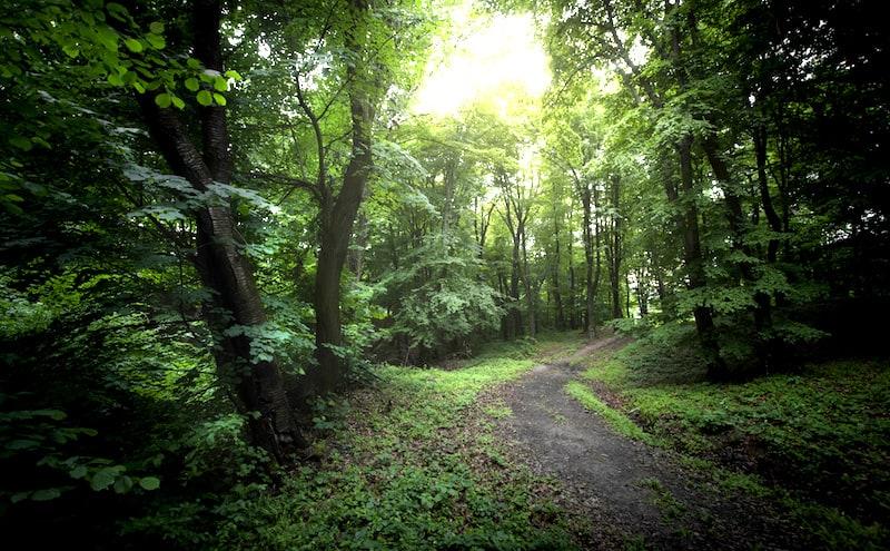 森の中での一筋の光